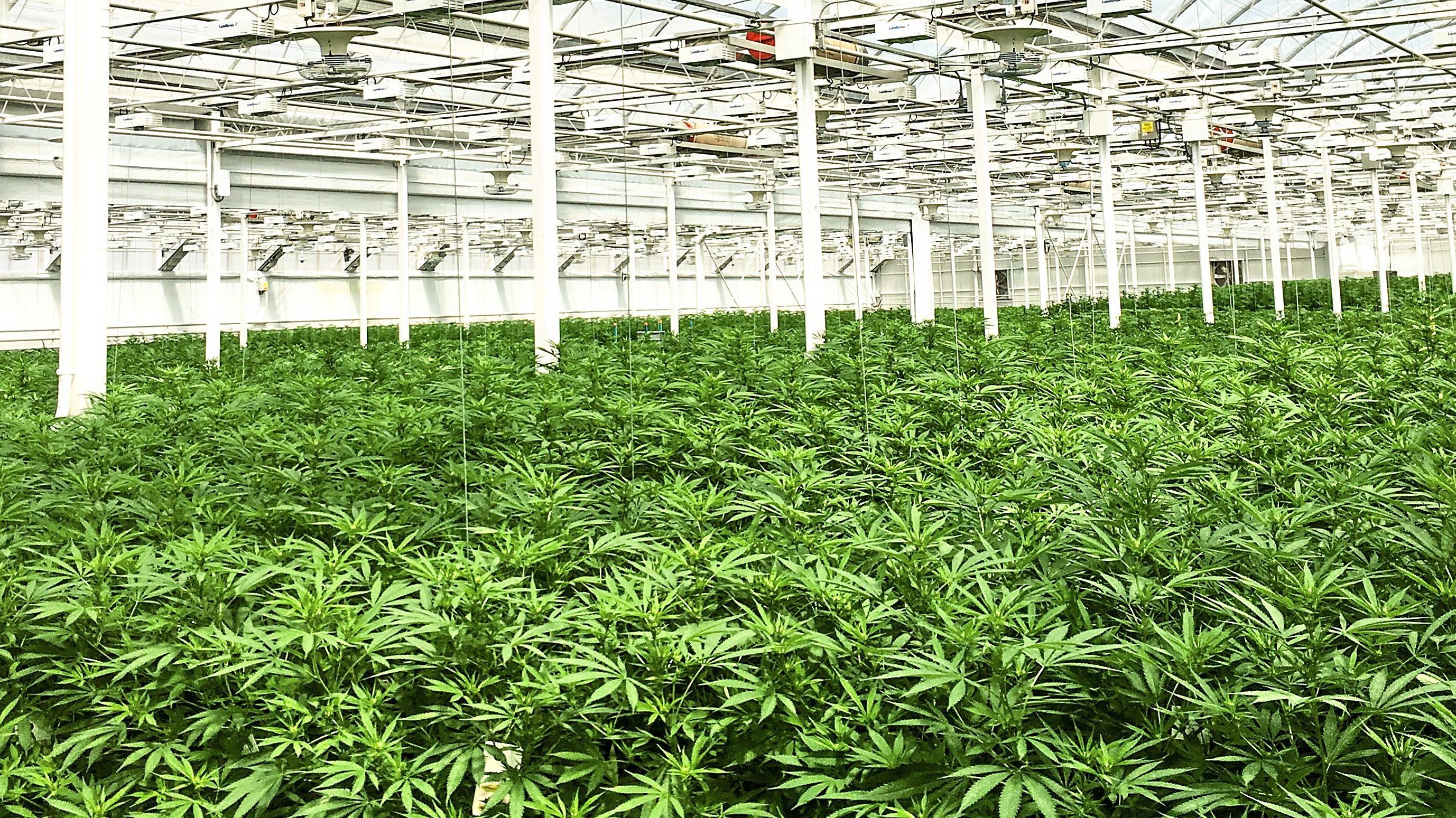 Kanada Legalisierung